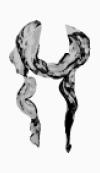 Roberto Cavalli Neck scarf